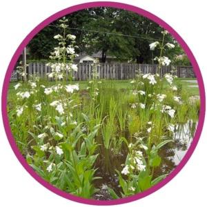 photo: residential rain garden