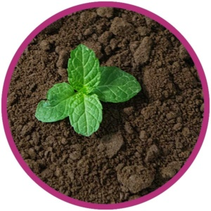 photo: young green plant in rich soil